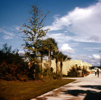 View of trees and campus buildings